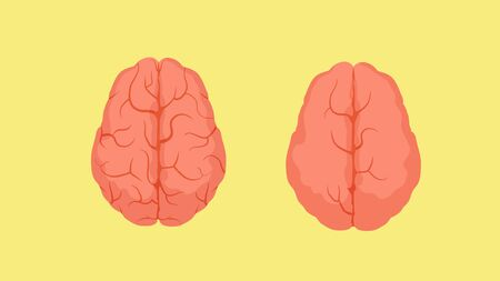 Structure of smart human brain and stupid. Two red crinkle brains one densely covered convolutions second there are almost none anatomical biology creative vector people limited clipart. Иллюстрация