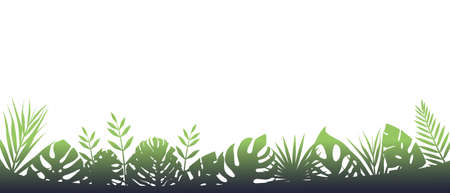 Green fern background in fog. Horizontal decoration of rainforests after rain floral botanical background with elegant blurred fern leaves wild natural lawn in saturated vector.