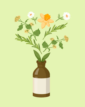 Herbal homeopathic collection. Organic treatment brown bottle with oil extracts chamomile and celandine herbs homeopathic natural flat healing from diseases power vector colored plants.
