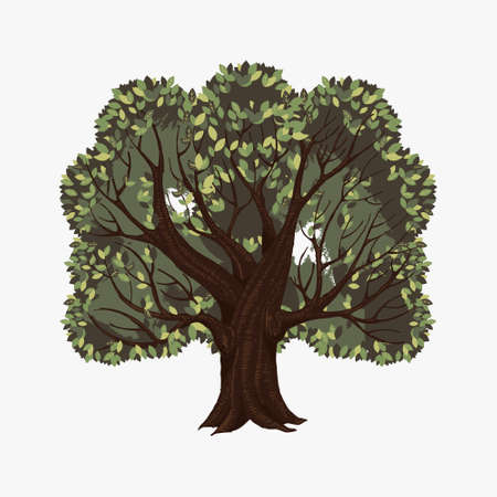 Old spreading tree. Ancient brown large oak tree with lush green crowns of leaves botanical design of an old garden and park wild summer vector nature. Illustration
