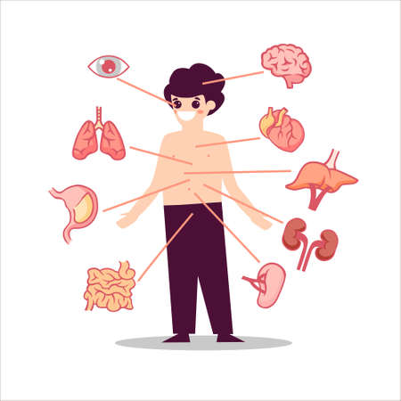 Human anatomy organs illustration Semicircular lungs with heart muscle digestive system small intestine and stomach eye pupil left right kidney pancreas with blood aorta medical biology flat vector.