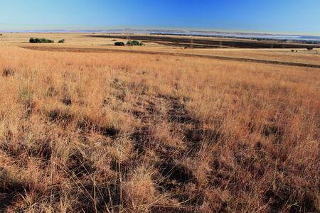 gauteng: Winter grasslands on the highveld in Gauteng South Africa