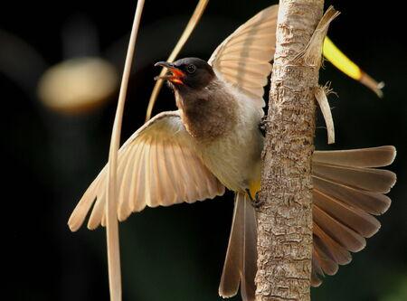 alarmed: Alarmed bird warning other birds