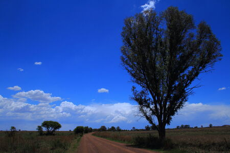 imminent: Landscape with storm clouds, trees and dirt road - impending storm