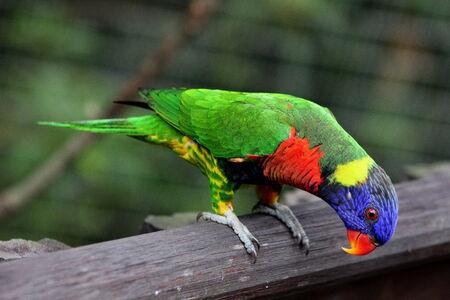 keen: A nosy, colourful bird Stock Photo