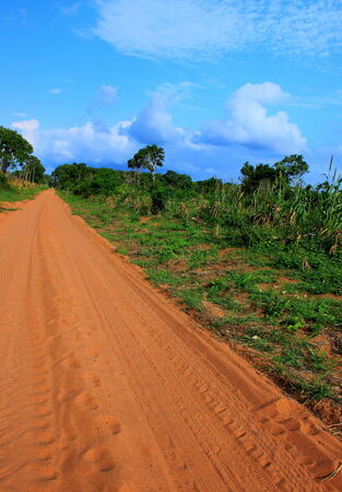 subsistence: Rural sand road through the forest