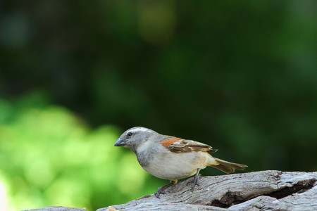 surroundings: Small bird paying attention to its surroundings Stock Photo