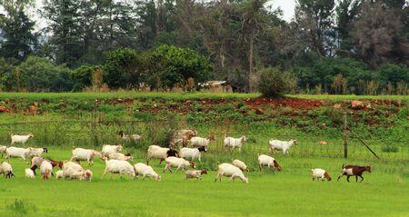 subsistence: Rural living - subsistence farming in Gauteng, South Africa