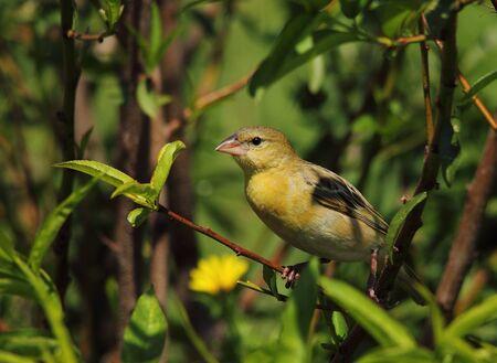Secretive bird hides between the leaves