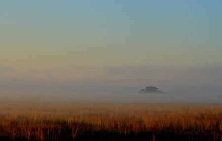 becloud: Tree hidden in a bank of mist at dawn Stock Photo