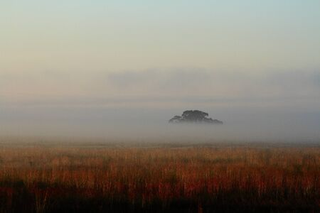 Tree hidden in a bank of mist at dawn Stock Photo