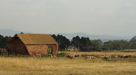 Old stone barn with sheep in the barnyard Stock Photo