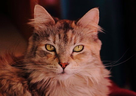 Cat - a small domesticated feline mammal Stock Photo