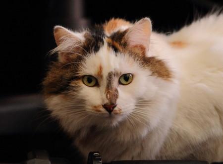 feline: Cat - a small domesticated feline mammal Stock Photo
