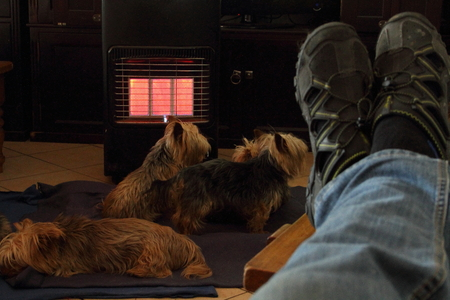 snug: Man with feet up with pet dogs in front of gas heater Stock Photo