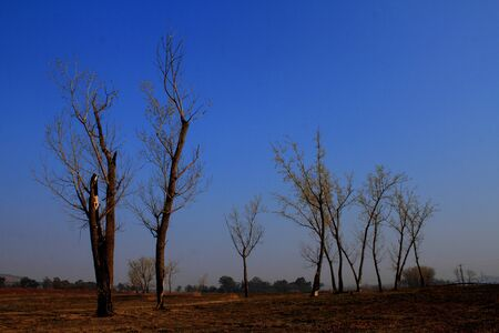 silhouetted: Trees silhouetted against a clear blue sky