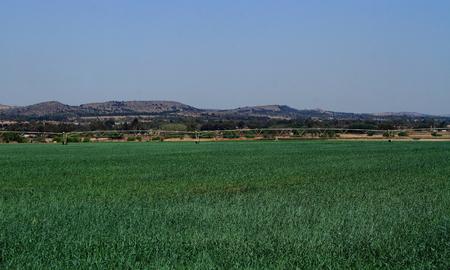 pivot: New crops on a field with pivot irrigation