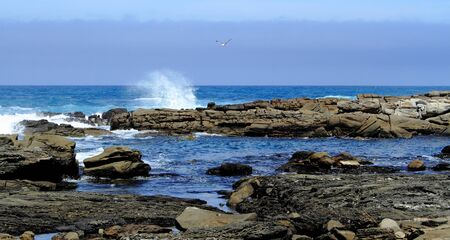 breaking waves: Seascape - ocean with breaking waves, rocks and a flying gull Stock Photo
