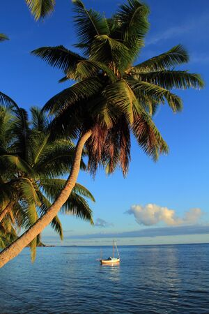 secluded: Small sail boat moored in a secluded bay with coconut trees