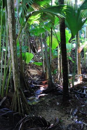 gondwana: Vallee de Mai - The Last Eden - Praslin Island Seychelles
