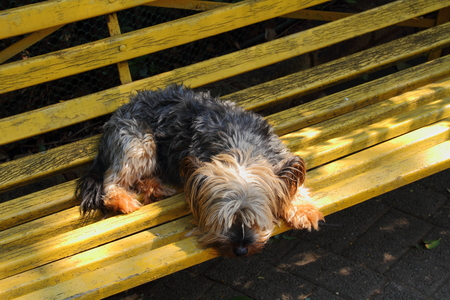 wood bench: A puppy lying on a yellow wood bench Stock Photo