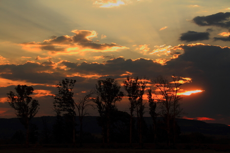 gauteng: Sunset with silhouetted trees in Africa