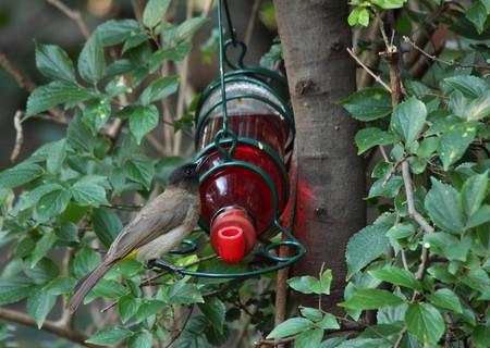 suburban: Bird using a nectar feeder in a suburban garden Stock Photo