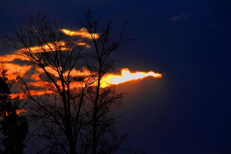 gauteng: Sunset with clouds and silhouetted trees