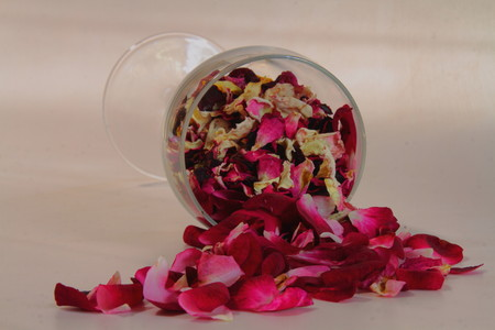 knocked over: Red rose petals spill like wine from a glass knocked over against a white background