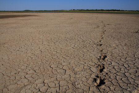 Footprints in dry, cracked mud Imagens
