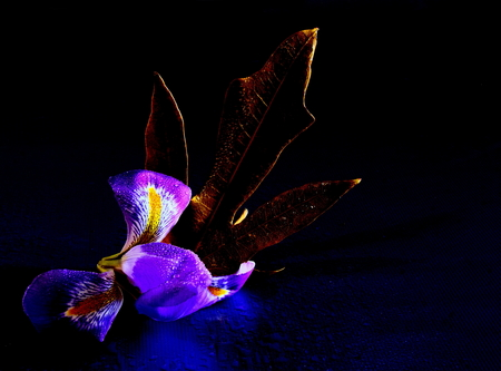 contradiction: An autumn leaf together with a colorful flower Stock Photo