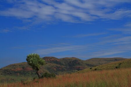 gauteng: View of southern Gauteng grassland with kiepersol tree South-Africa Stock Photo