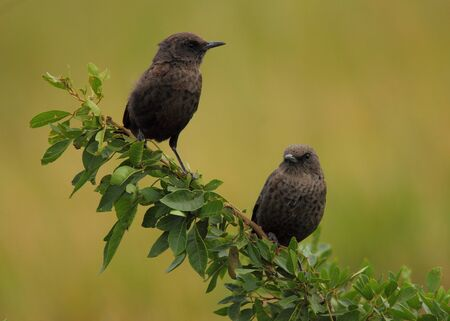 chats: Two birds perched on a branch with clear green background
