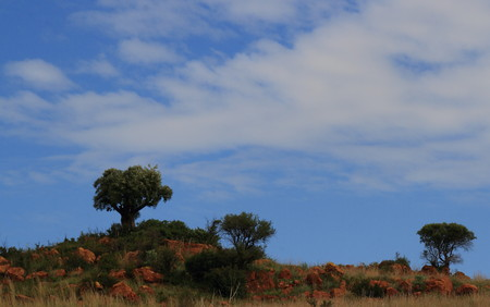 gauteng: Landscape with three trees on a rocky hill