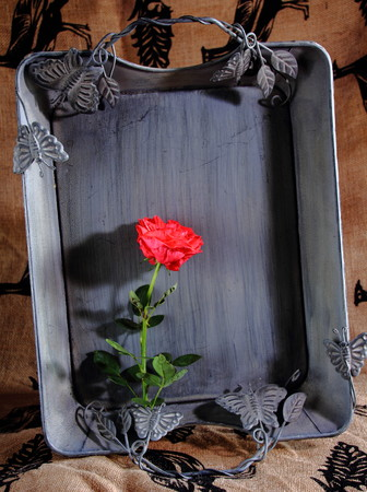 grey: Grey tray with red rose Stock Photo