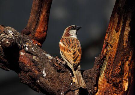 birding: Brown bird on a dry tree against a dark background