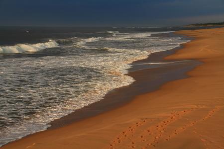 spoor: Golden beach landscape