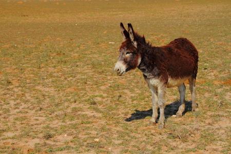 dry land: Donkey on dry land