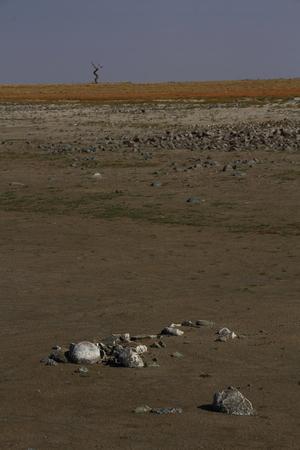 barren: Barren landscape with tree - portrait format Stock Photo