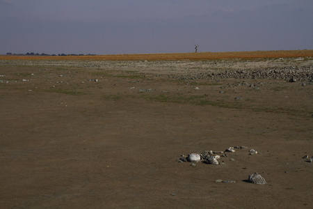 landscape format: Barren landscape with a single tree -landscape format