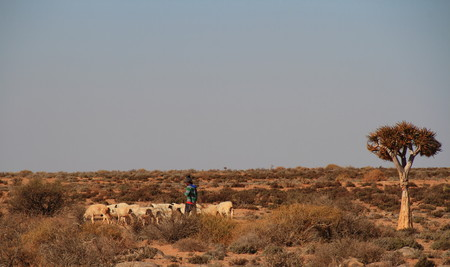 herdsman: Sheep and herdsman on a subsistence farm