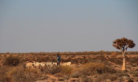 herdsman: Sheep and herdsman on a subsistence farm