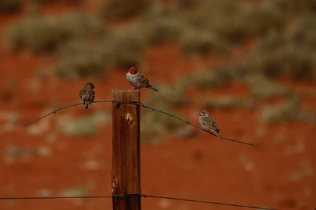 birds on a wire: Three birds perched on a wire