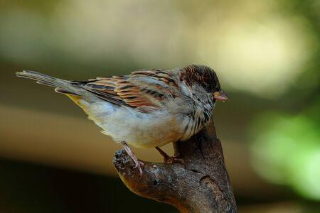 heartwarming: Juvenile sparrow
