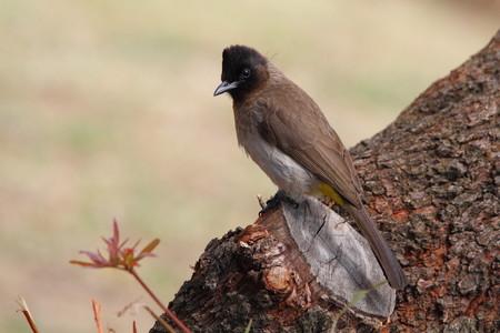 birding: A bird perched on a tree stump