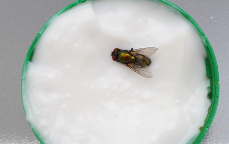 A fly in white ointment