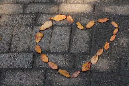 Leaves shaped like a hart on dark paving Stock Photo
