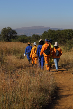 Black workers in orange and blue overalls walk to work through the South African bush Stock Photo