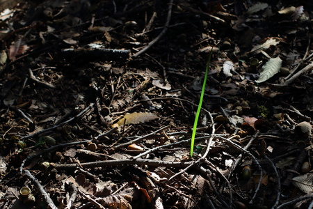 orientated: A single green shoot emerges from a bed of decaying vegetation landscape format