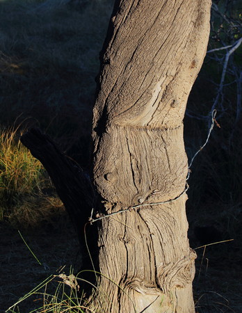 Un vieux poste de clôture altérée avec un brin de barbelés Banque d'images - 77397668